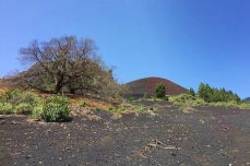 opadaný jedlý kaštan a vulkán v dáli